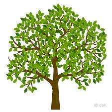 Tree Image 10.10.2020